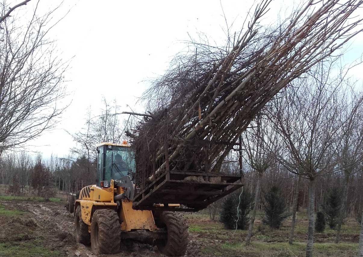 Débardage des arbres