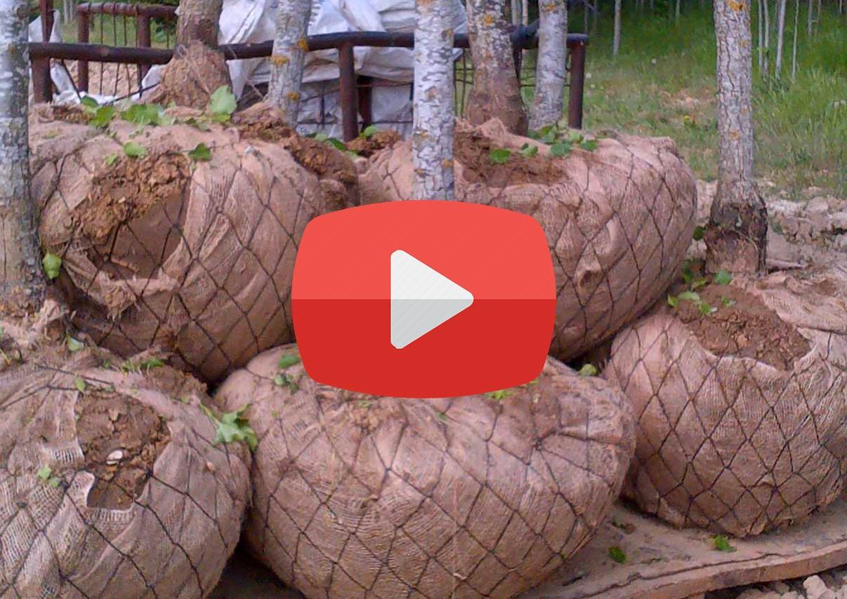 Mottes Grillages